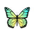 The butterfly with blue wings vector image vector image