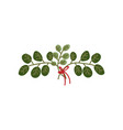 twigs with green leaves tied with red ribbon vector image vector image