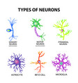 types of neurons structure sensory motor neuron vector image vector image