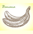 detailed hand drawn banana in vector image