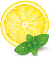lemon and mint on white background vector image vector image