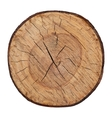 wood texture cutted tree trunk vector image vector image