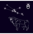 Constellation Taurus Realistic star White bull vector image vector image