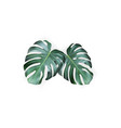 realistic green tropical monstera leaves from top vector image