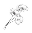 vintage poppy vector image vector image