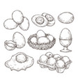 eggs sketch vintage natural egg broken shell vector image