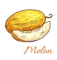Melon color sketch icon vector image vector image