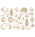 fruits sketch food icons tropical exotic isolated vector image vector image