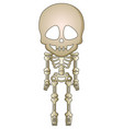 cartoon skeleton vector image