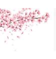 sakura realistic background vector image