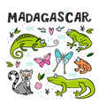 set of madagascar animals hand drawn vector image vector image