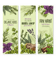 spices and herbs banners set vector image vector image