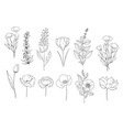 botanical set black and white graphic flowers vector image