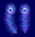 peacock feathers on dark blue background vector image