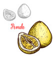 pomelo sketch exotic fruit icon vector image vector image