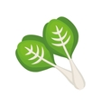 Spinach healthy food vector image