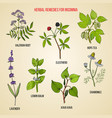 best herbal remedies for insomnia vector image vector image