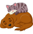 cartoon cat and dog sleeping vector image vector image