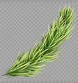 christmas tree fir branch isolated eps 10 vector image