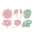 collection of hand drawn pastel lotus vector image vector image