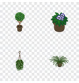 isometric houseplant set of plant tree flowerpot vector image