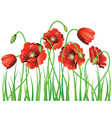 Poppy with Grass vector image vector image