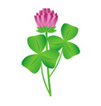 Clover flower vector image vector image