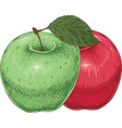 ripe green and red apples vector image vector image