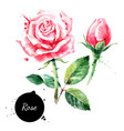 watercolor hand drawn rose painted sketch flower vector image vector image