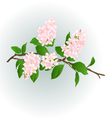 Pink Lilac branch natural background vector image