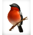 Bullfinch icon vector image