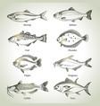 hand drawn sketch fish animals set black and vector image vector image