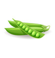 ripe green pods with peas icon isolated on white vector image