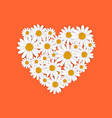 spring heart frame with blooming chamomile vector image vector image