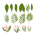 set tropical plants and palm leaves isolated vector image