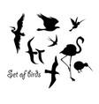 set silhouettes birds symbols vector image vector image