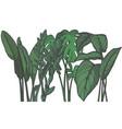 tropical plant mix vector image