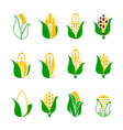 corn icons set isolated on white rye seed with vector image vector image