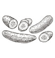 cucumbers sketch vegetables natural food vector image vector image