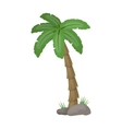 Palm tree icon in cartoon style isolated on white vector image vector image