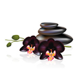 Pebbles and Spa composition vector image