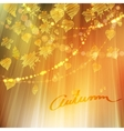 Autumn background with different leaves vector image vector image