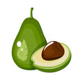 avocado fruit cartoon icon isolated on white vector image