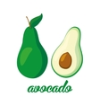 Avocado fruits poster in cartoon style depicting vector image
