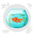 gold fish floating in aquarium bowl vector image vector image