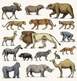 gorilla moose or eurasian elk camel and deer vector image vector image