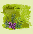 herb and spice with fresh leaf sketch poster vector image vector image