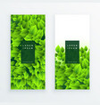 set of green leaves banner vector image vector image