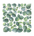 watercolor card with green eucalyptus vector image vector image