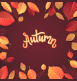 autumn lettering hand written typography on white vector image vector image